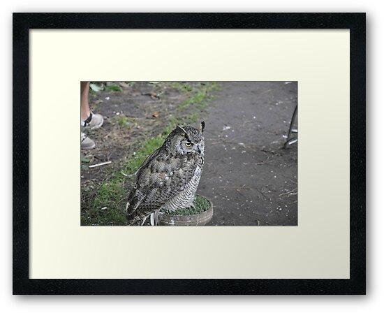 owl 1 by roggcar