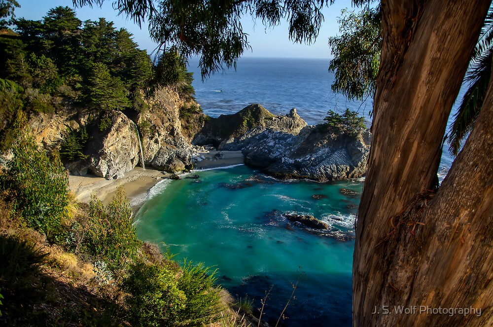 Julie Pfeiffer State Park Behind Tree by jswolfphoto