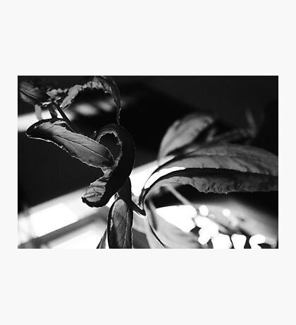 My Plant! Photographic Print