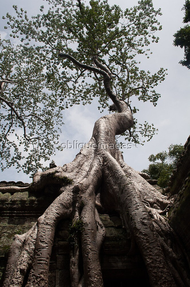 Ta Prohm by obliqueimages
