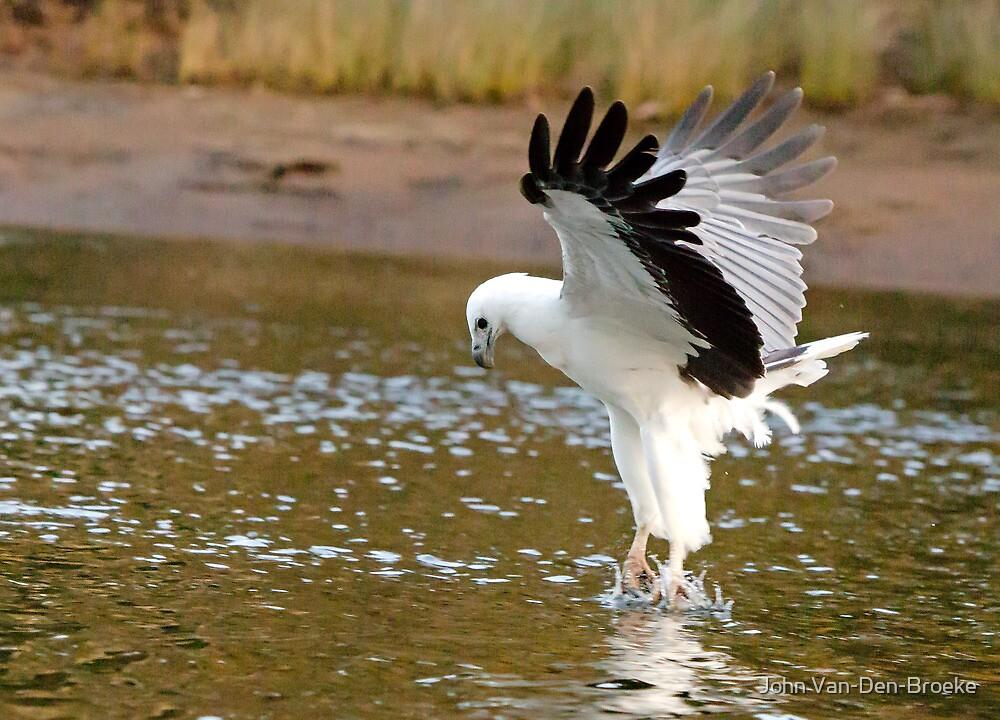 Sea Eagle 74 by John Van-Den-Broeke