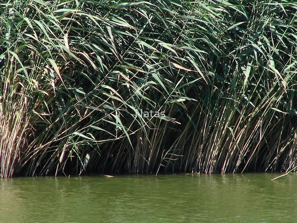 Reed by Natas