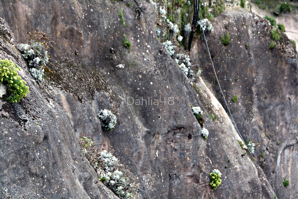 PLANT LIFE ON THE CLIFF FACE . by Dahlia48