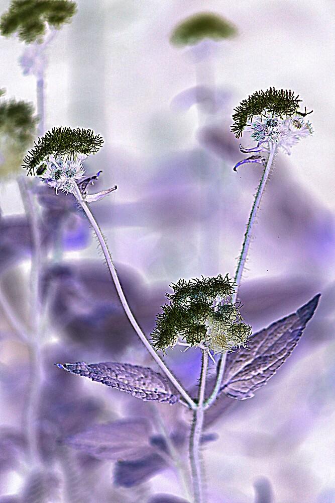 Purple Flowers by Jenelle  Irvine