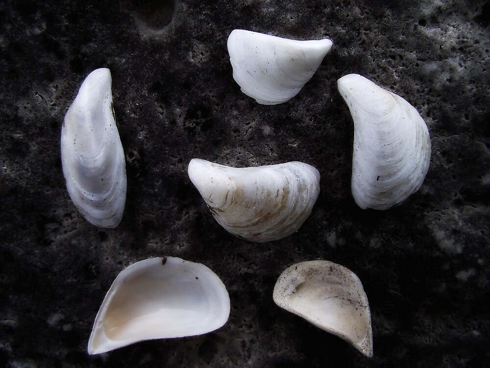 Six Shells by Ken Hill