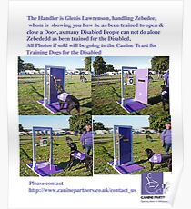 Dog for Disabled People  Poster