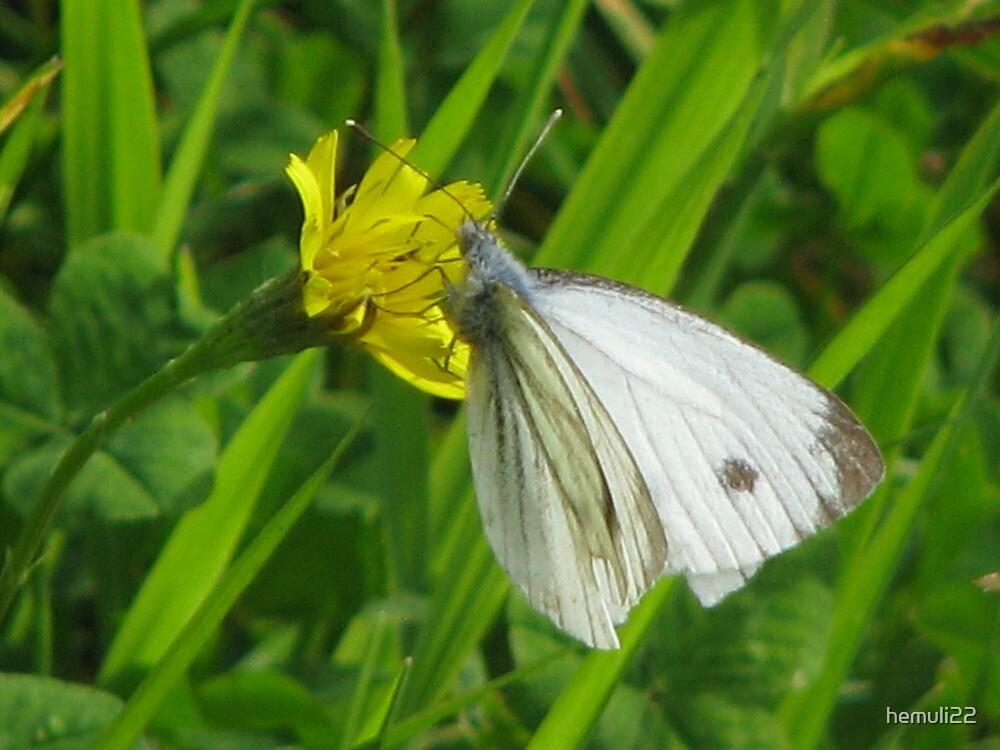 Butterfly by hemuli22