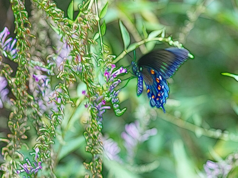 Butterfly Blue by Kay  G Larsen