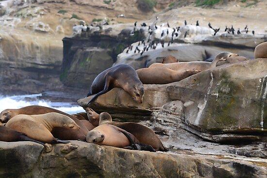 Sun bathing seals by joyfulmoments61