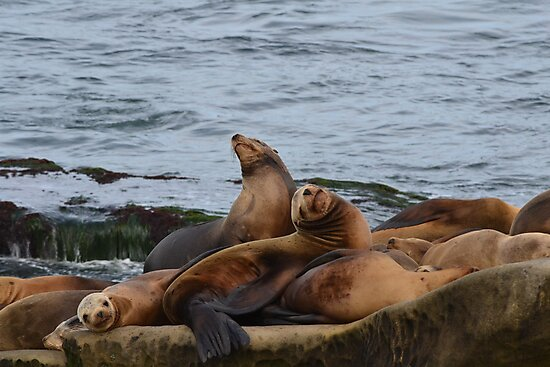 Sun bathing seals by joyfulmoments61