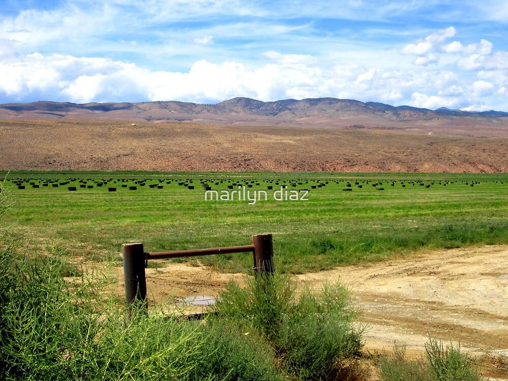 Hay In The Field by marilyn diaz