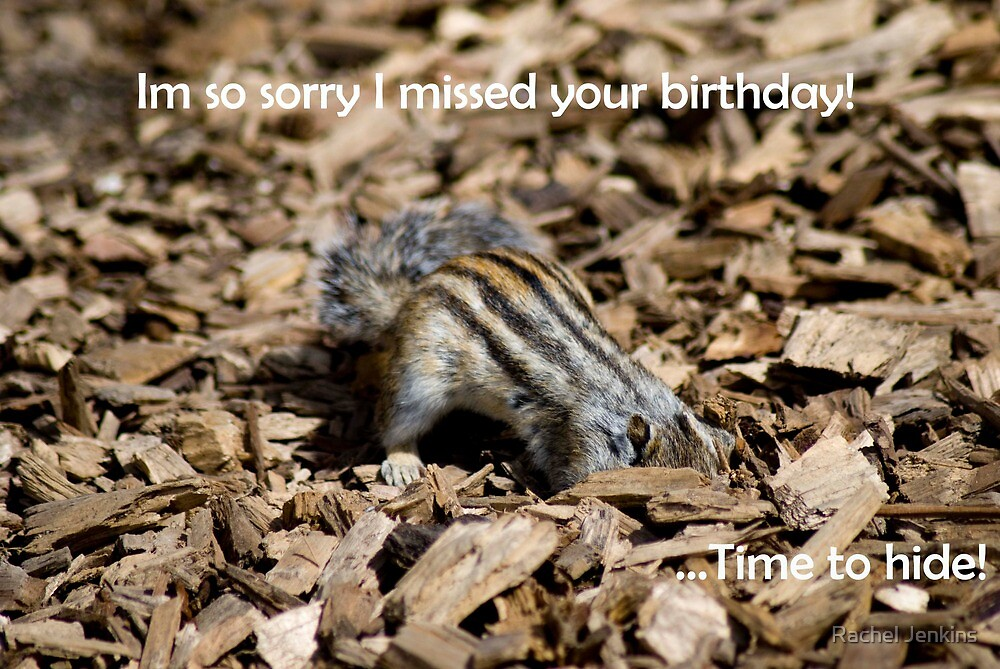Sorry I forgot you birthday card - Chipmunk by Rachel Jenkins