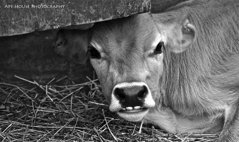Happy Cow by Apehouse