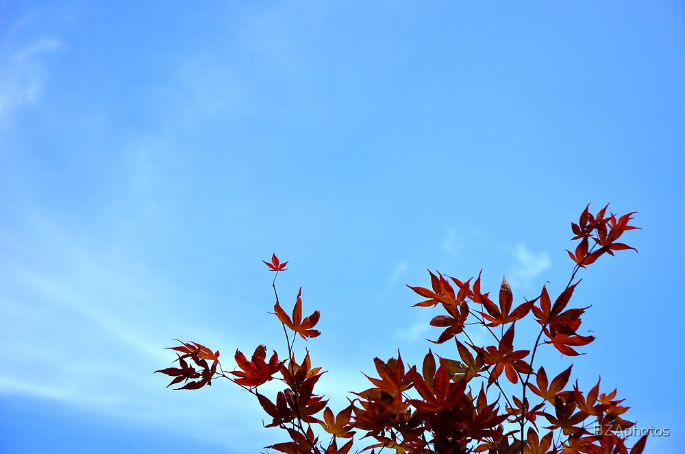 red leaves by BZAphotos