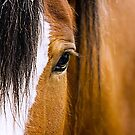 Equus by Stuart Robertson Reynolds