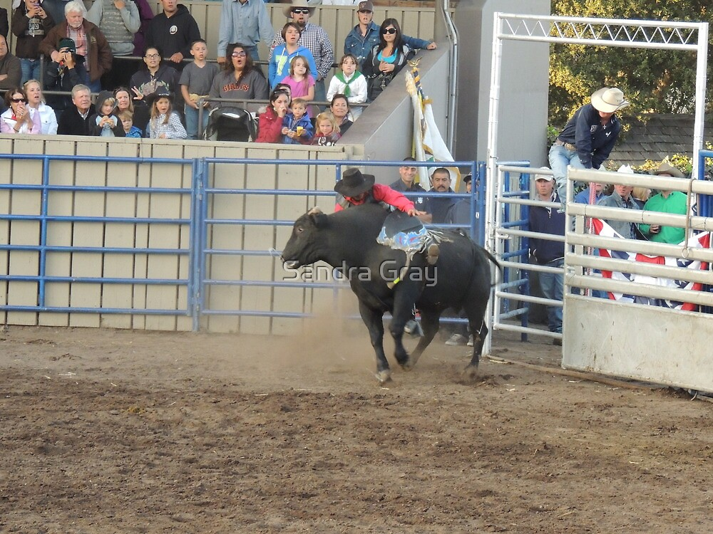 About to Fall Off? Bull Riding Monterey County Fair Rodeo by Sandra Gray