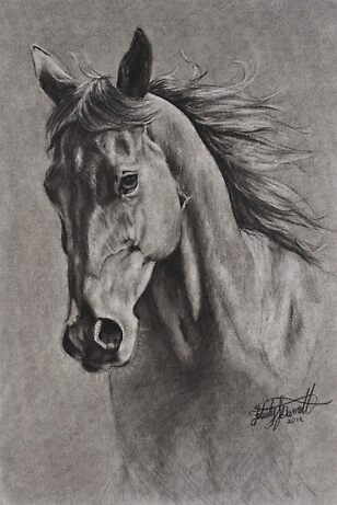 Horse in Charcoal by Felicity Deverell