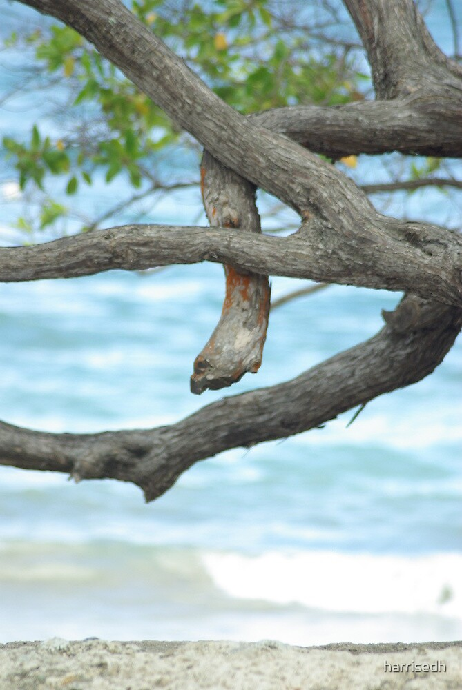 """The """"Snake"""" In The Tree by harrisedh"""