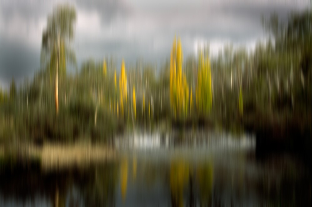 Autumn Poplars by DBigwood