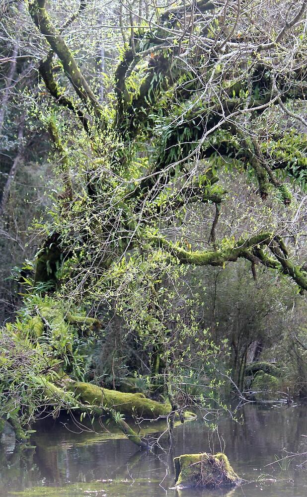 swampy patch at Cockle Creek - far s.Tasmania by gaylene