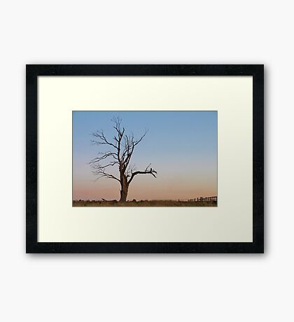 A Place for Birds to Rest Framed Print