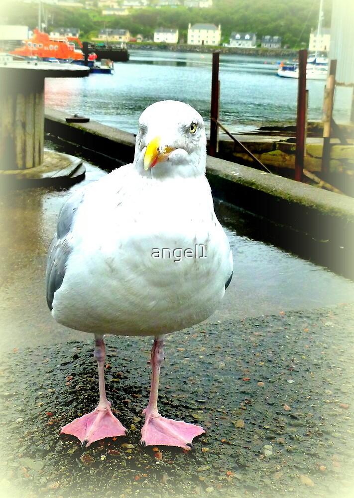 Mallaig Gull by ©The Creative  Minds