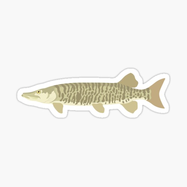 Muskellunge (Muskie) - Esox masquinongy Sticker