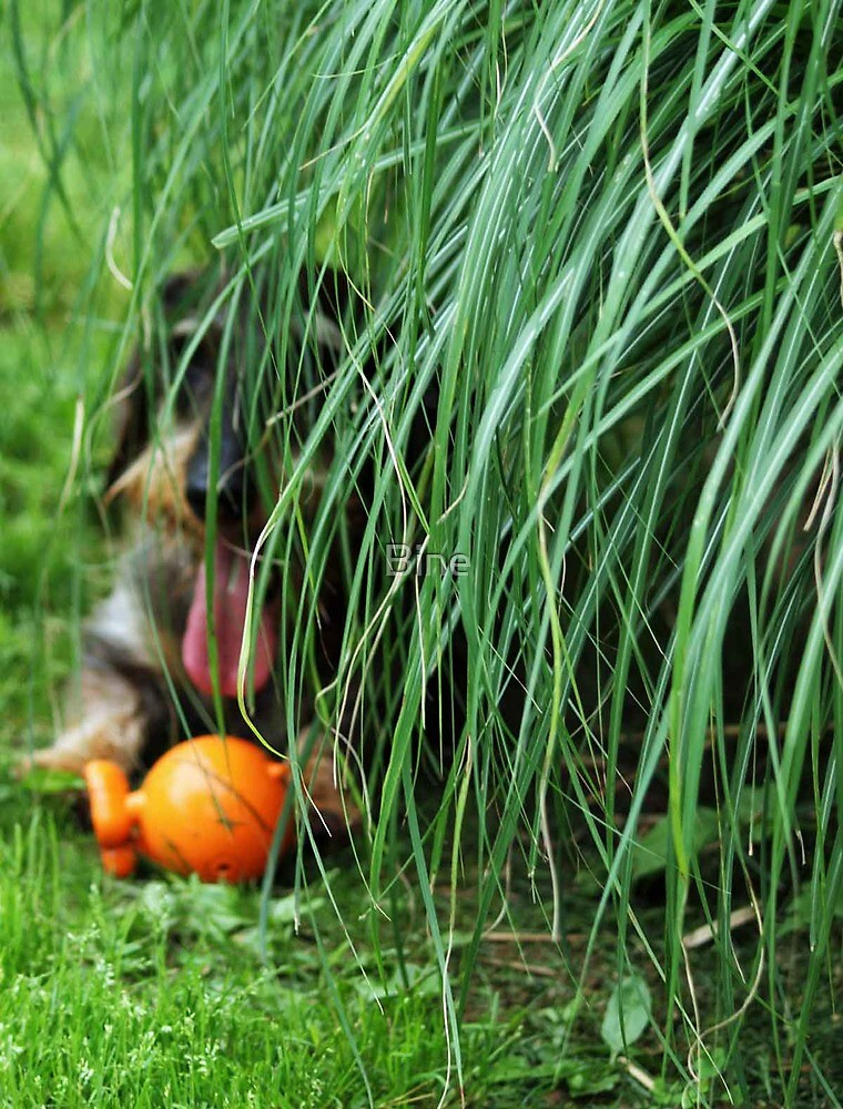 Hiding with my ball by Bine