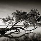 Rest by Michael Howard