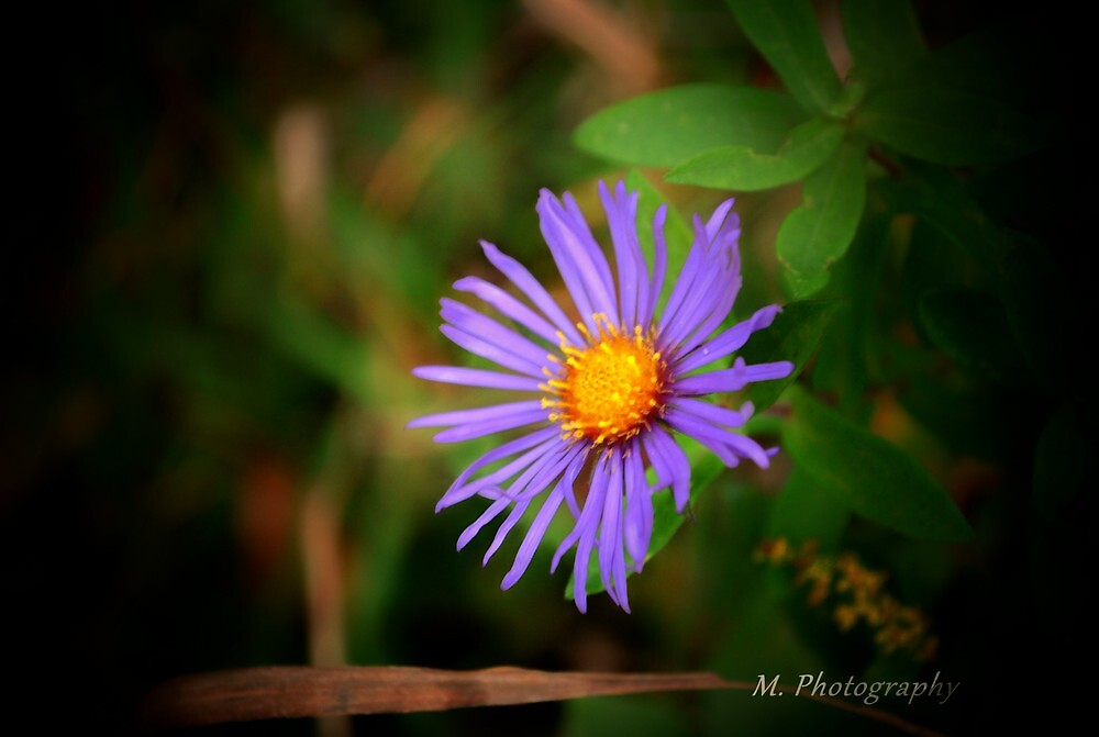 Purple by M.  Photography