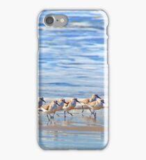 We're following the leader... Sandpipers in Goleta Beach California iPhone Case/Skin