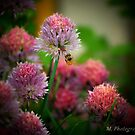 Spring into Life by M.  Photography