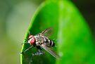 Fly Gliding by Alejandro  Tejada