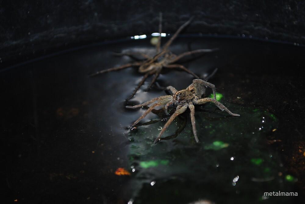 Wolf Spider by metalmama