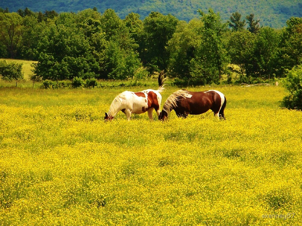 Horses Grazing at Smuggler's Notch by ekenney87