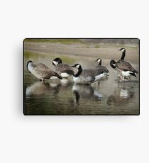 Canada Geese Soon to Go South Canvas Print