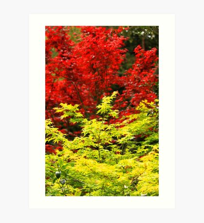 Red And Yellow Leaves Art Print