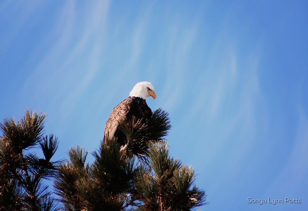 Looking for lunch by Sonya Lynn Potts