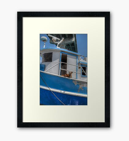 Sea dogs in The Bahamas Framed Print