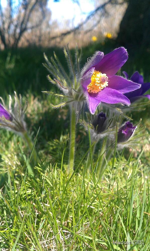 Purple Flower by Madsen1981