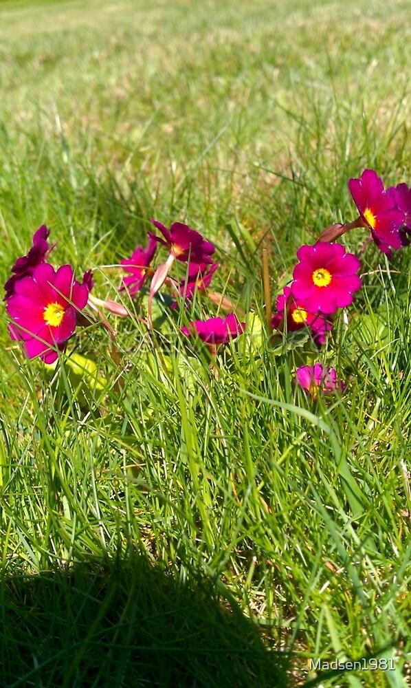 Purple Green Grass by Madsen1981