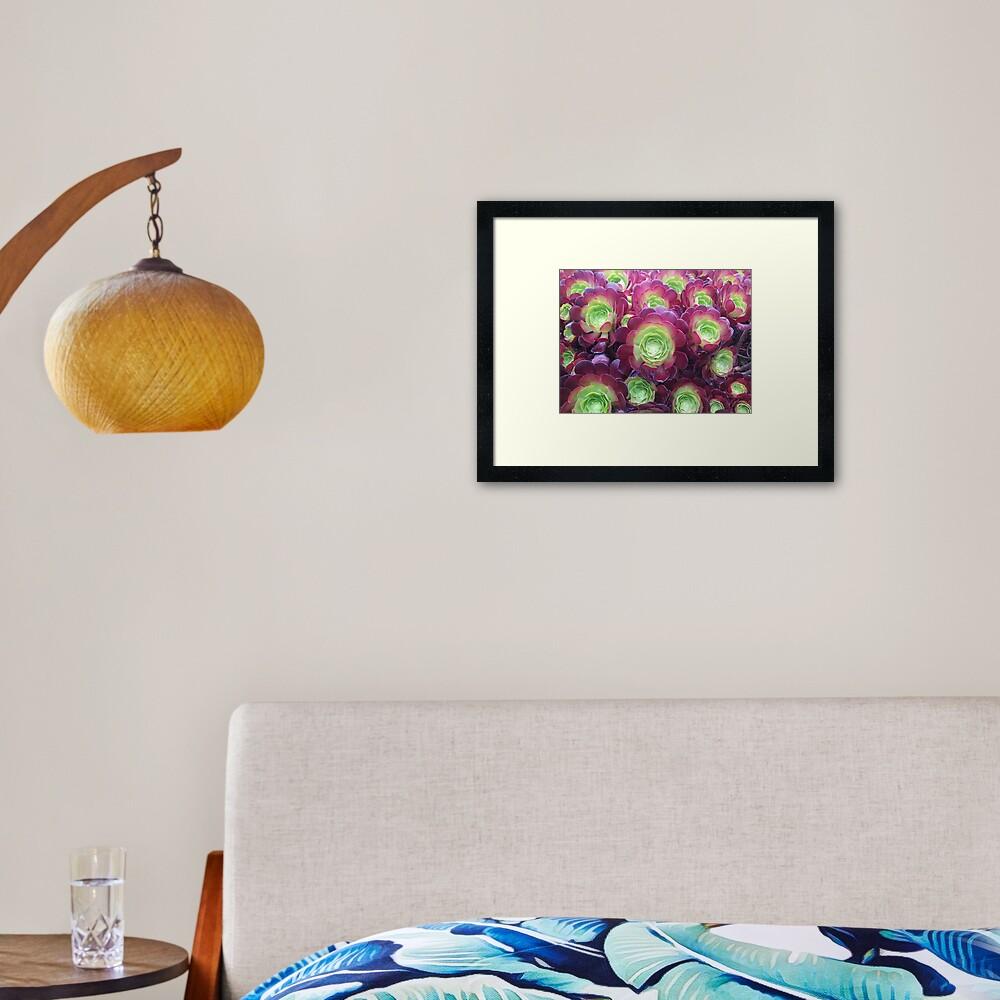 Succulents at the Desert Garden Framed Art Print