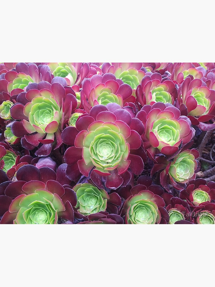 Succulents at the Desert Garden by TalBright