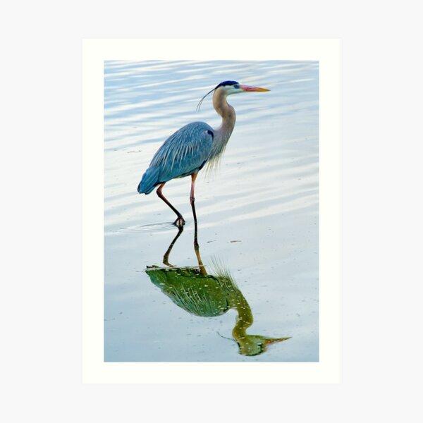Blue Heron Art Print