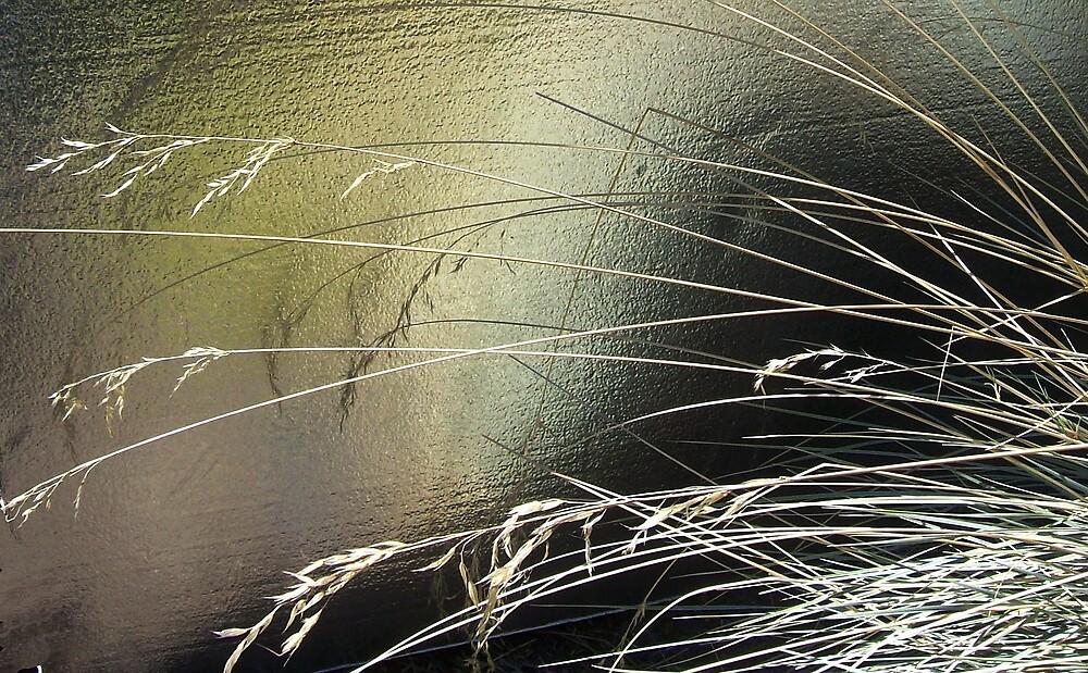 Grass by Jimmy Joe