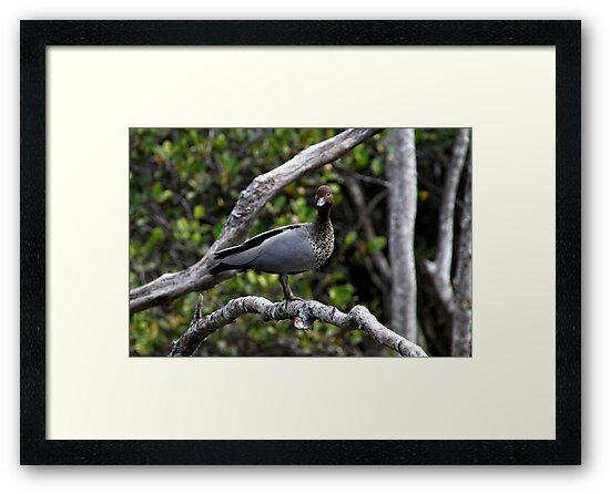 Wild Duck In A Tree by Noel Elliot