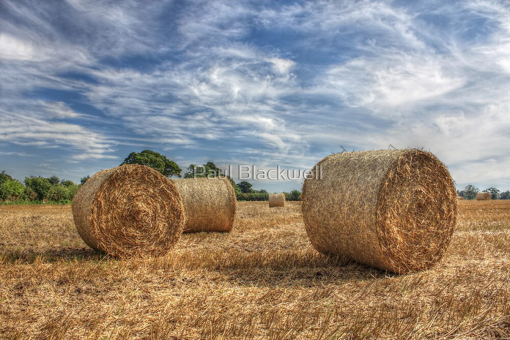 Harvest by Paul Blackwell