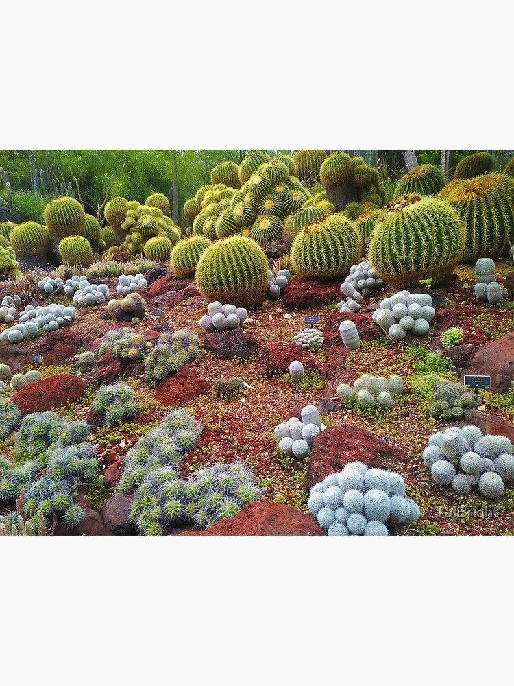 Cute Cacti by TalBright