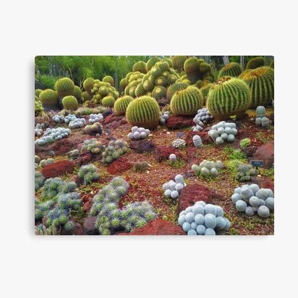 Cute Cacti Canvas Print