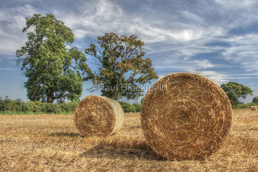 Ready for the Harvest by Paul Blackwell